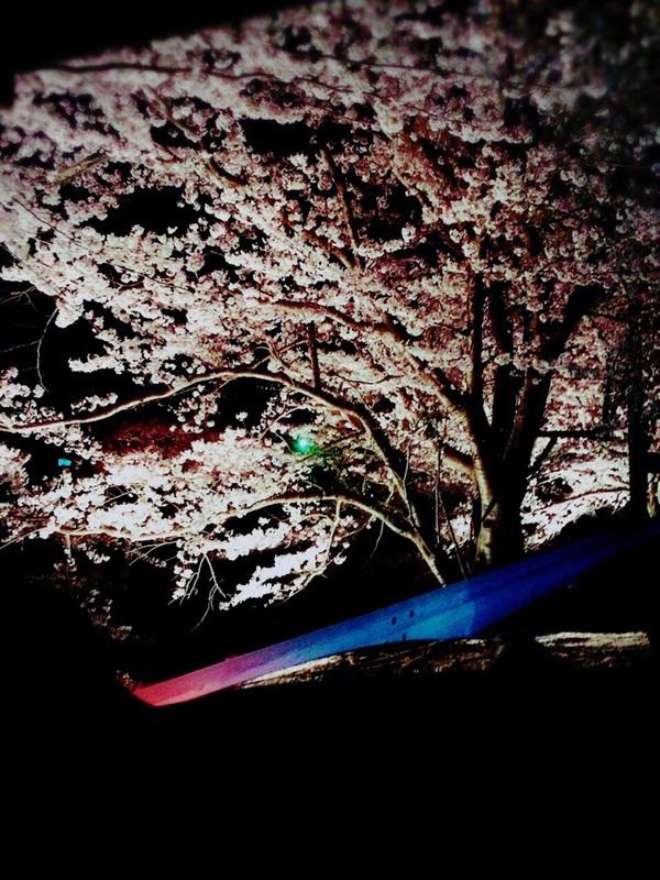 MakeLetトータルヘアプロデュース夜桜