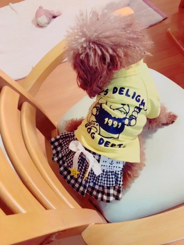 MakeLetトータルヘアープロデュース看板犬の第5代トイプーのこすずちゃん
